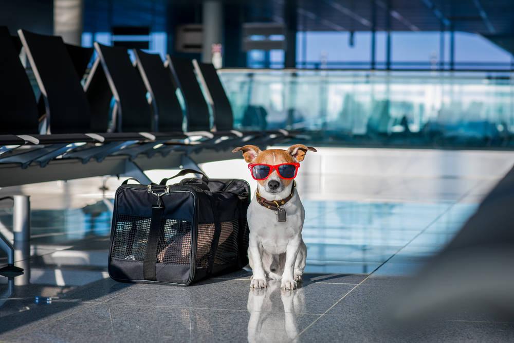 Empresas dedicadas al transporte por avión de animales