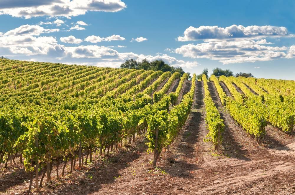 Cambios en el sector vinícola